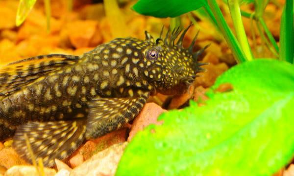 Makanan Laut Teraneh Wajib Dicoba Okezone Lifestyle