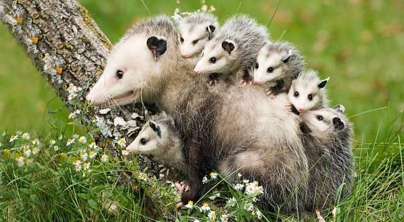 https: img-z.okeinfo.net content 2015 01 02 406 1087030 hewan-ikut-rayakan-tahun-baru-BTQJmcTqNu.jpg