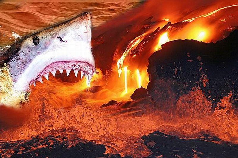 https: img-z.okeinfo.net content 2015 07 14 18 1181412 hiu-tahan-panas-ditemukan-di-gunung-berapi-KZ8PVKa0T1.jpg