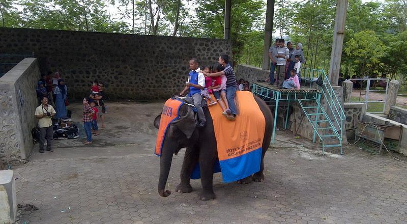 https: img-z.okeinfo.net content 2015 07 22 406 1183819 serunya-keliling-naik-gajah-way-kambas-di-pekalongan-8il2PRJFv2.jpg