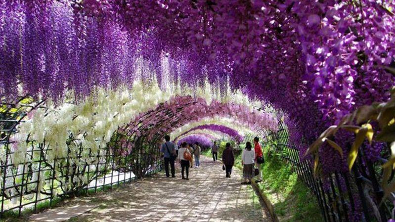 https: img-z.okeinfo.net content 2015 08 02 406 1189352 kawachi-fuji-taman-paling-berwarna-di-jepang-GZBnzfnmUt.jpg