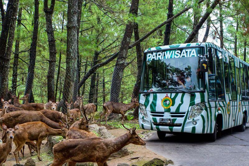 https: img-z.okeinfo.net content 2016 01 31 406 1301263 taman-safari-indonesia-kehadiran-4-hewan-di-2016-L7Pg6N48sJ.jpg