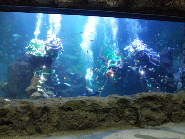 https: img-z.okeinfo.net content 2016 02 03 406 1303818 atraksi-barongsai-di-kolam-raksasa-seaworld-BRhOkvddJ2.jpg