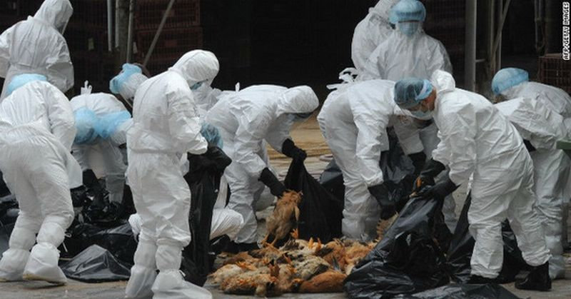 https: img-z.okeinfo.net content 2016 03 21 338 1342000 diduga-ada-virus-flu-burung-dinas-peternakan-sisir-daerah-jaksel-ZECN3wRA9r.jpg