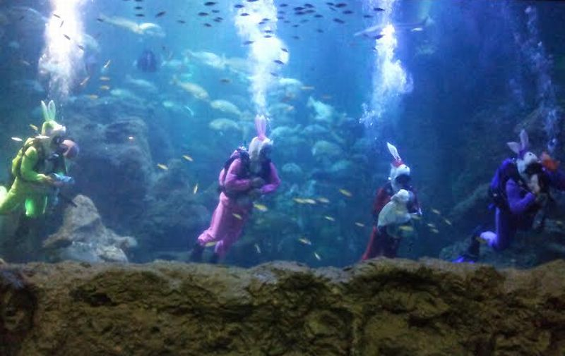 https: img-z.okeinfo.net content 2016 03 23 406 1343426 atraksi-baru-sea-world-indonesia-YAXsf5urVT.jpg
