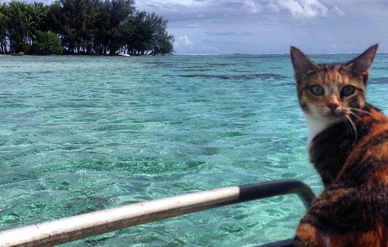https: img-z.okeinfo.net content 2016 04 28 406 1374718 kucing-ini-keliling-dunia-vdVwAHLgeV.jpg