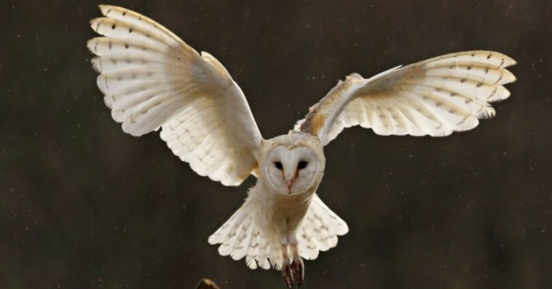 https: img-z.okeinfo.net content 2016 04 30 56 1376920 alasan-burung-hantu-terbang-lebih-senyap-EQtysBteQM.jpg