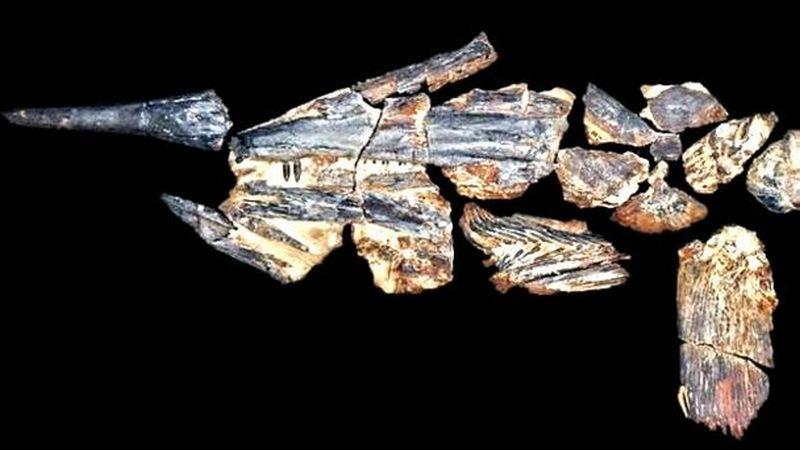 https: img-z.okeinfo.net content 2016 10 16 56 1516225 fosil-ikan-pedang-tertua-ditemukan-di-australia-NANU35sOFp.jpg