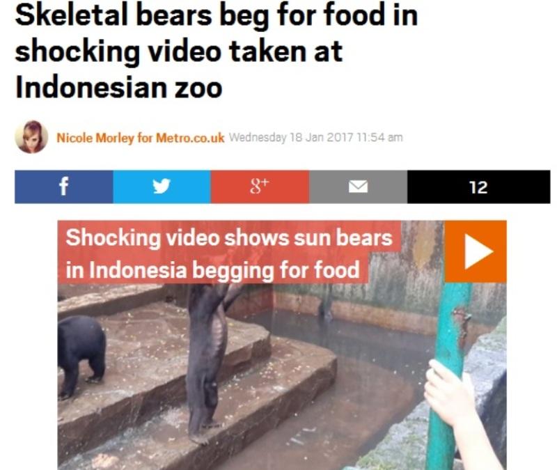 https: img-z.okeinfo.net content 2017 01 18 18 1595093 video-media-asing-soroti-beruang-kurus-ngemis-makanan-di-kebun-binatang-bandung-MkCbnqvaPu.jpg