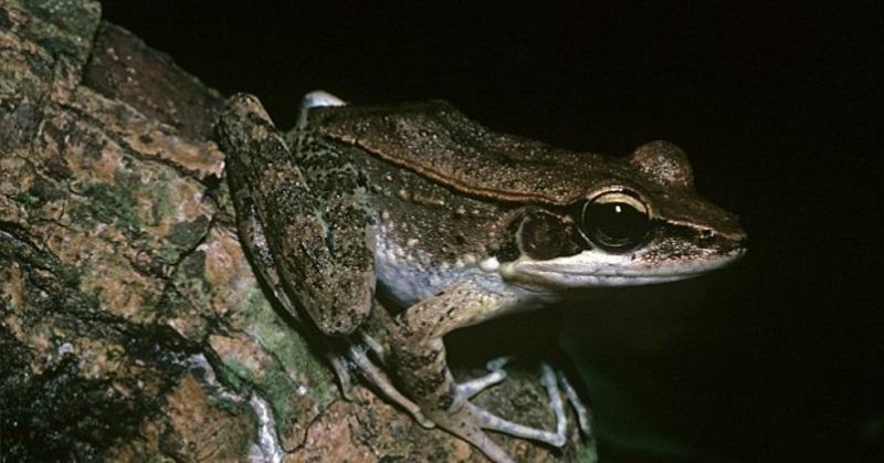 https: img-z.okeinfo.net content 2017 03 02 56 1632532 keren-katak-ternyata-bisa-melihat-warna-dalam-gelap-8BLEqc9nTT.jpg