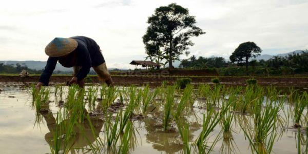 https img z okeinfo net content 2017 03 16 20 1644613 anggaran dana desa 2017 difokuskan bangun pertanian nwPCKqRXMC jpg