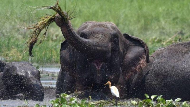 https: img-z.okeinfo.net content 2017 06 19 18 1719975 tewas-ditabrak-bayi-gajah-dibiarkan-tergeletak-di-pinggir-jalan-Gy8buEHdIG.jpg