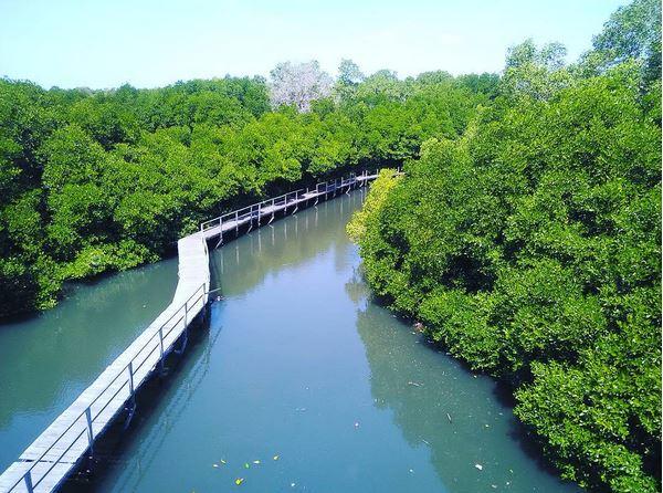 https: img-z.okeinfo.net content 2017 06 19 406 1719832 uncover-indonesia-menelusuri-keindahan-hutan-mangrove-bali-dGYNoGcgfZ.JPG