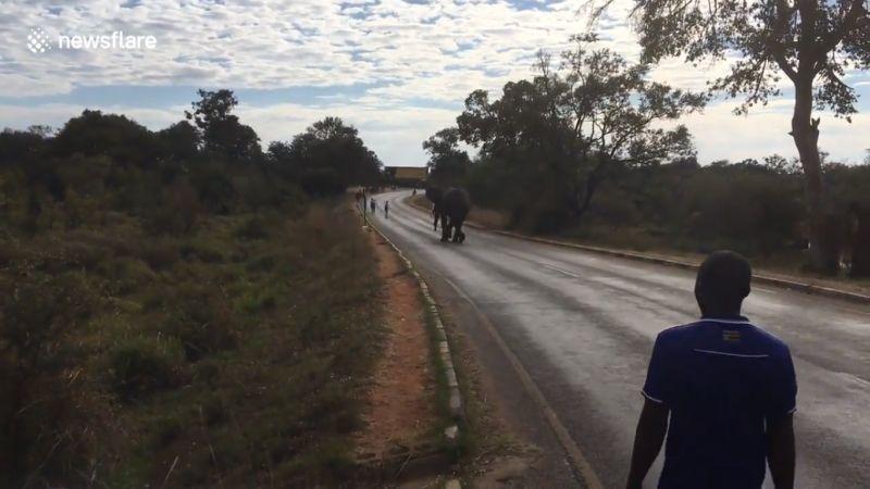https: img-z.okeinfo.net content 2017 06 30 18 1726136 video-gajah-kejar-peserta-lari-maraton-victoria-falls-Ed9Jp8DLGW.jpg