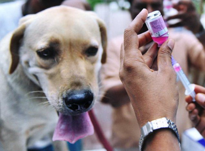 https: img-z.okeinfo.net content 2017 07 11 340 1733353 13-persen-hewan-pembawa-rabies-di-denpasar-belum-divaksinasi-apa-langkah-pemerintah-WtSK6JaNZK.jpg