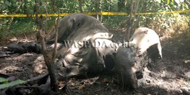 https: img-z.okeinfo.net content 2017 07 20 340 1740500 perburuan-makin-marak-di-aceh-4-ekor-gajah-liar-ditemukan-mati-af3rq3GGvK.jpg
