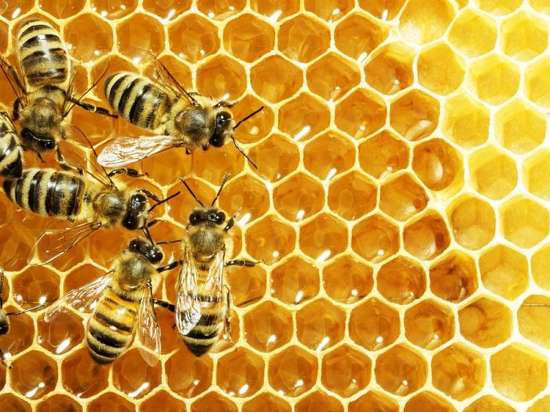 https: img-z.okeinfo.net content 2017 07 31 481 1746925 keren-mahasiswa-unair-teliti-madu-lebah-apis-dorsata-bisa-cegah-osteoporosis-4SssAx5dHX.jpg