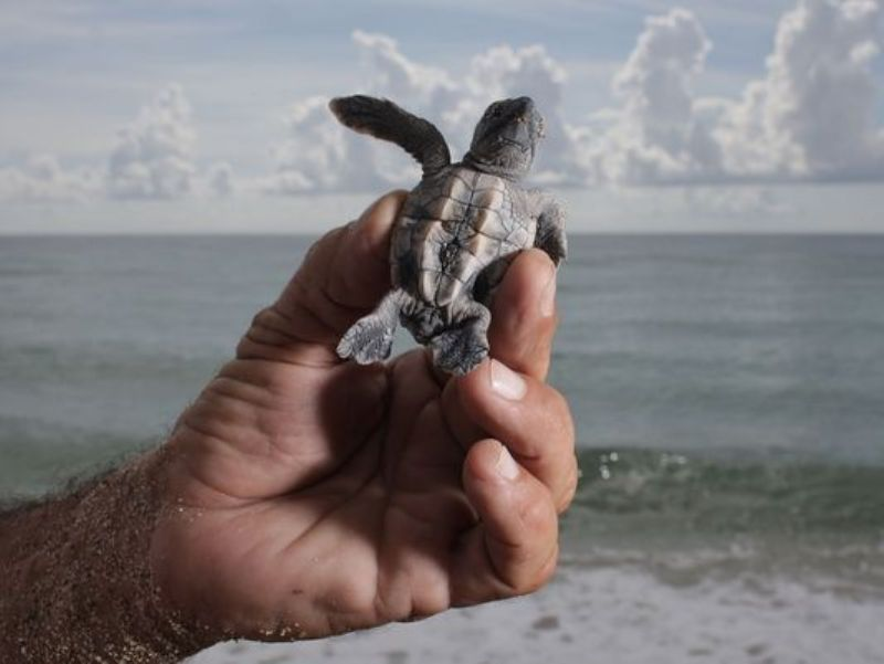 https: img-z.okeinfo.net content 2017 08 02 18 1748780 duh-musim-kawin-kura-kura-sebabkan-turis-terjebak-di-pulau-yunani-6wyfUjBTxl.JPG