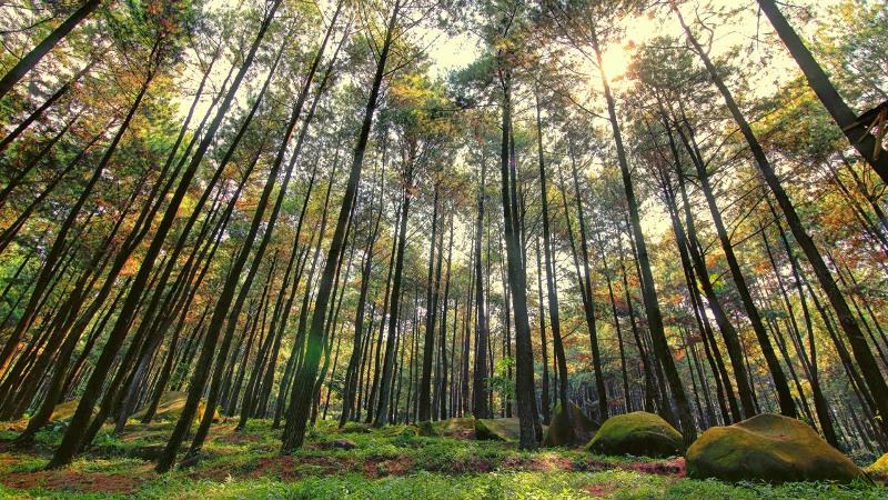 https: img-z.okeinfo.net content 2017 09 06 406 1770657 share-loc-penat-dengan-rutinitas-yuk-santai-sejenak-wisata-ke-hutan-pinus-catang-malang-bogor-wrnHn5D5oE.JPG