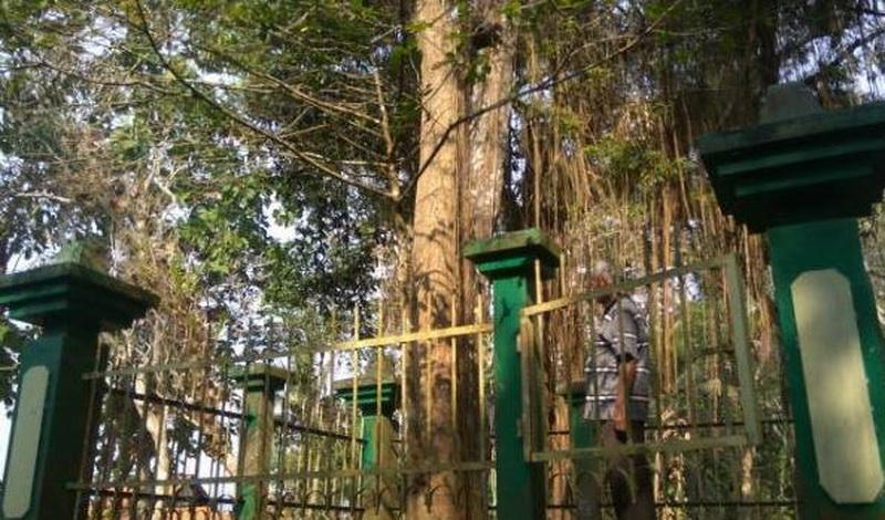 https: img-z.okeinfo.net content 2017 09 08 406 1772028 misteri-pohon-tembaga-konon-cuma-satu-di-indonesia-dan-ukurannya-tak-berubah-jENGTel4KT.JPG