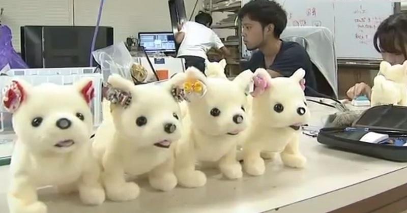 https: img-z.okeinfo.net content 2017 09 10 207 1773007 unik-robot-anjing-ini-bisa-pingsan-saat-cium-bau-kaki-kok-bisa-qtFFLwwEBX.jpg