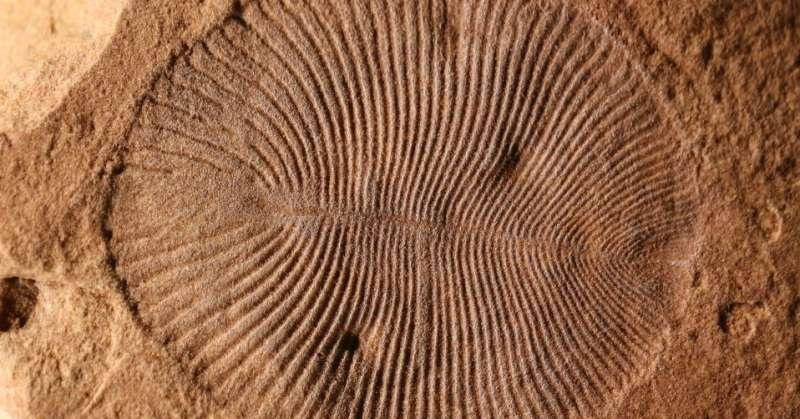 https: img-z.okeinfo.net content 2017 09 16 56 1777183 akhirnya-peneliti-ungkap-misteri-mengenai-fosil-binatang-ini-Sm8MgMxtCz.jpg