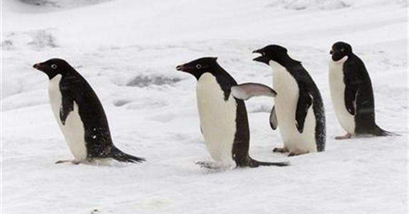https: img-z.okeinfo.net content 2017 10 13 56 1795203 peneliti-temukan-ribuan-anak-penguin-kelaparan-di-antartika-kok-bisa-Ap6VqQebqs.jpg