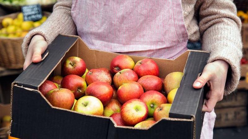 https: img-z.okeinfo.net content 2017 10 17 481 1797034 ingin-awet-muda-makan-1-apel-setiap-hari-1dJldt0uzl.jpg