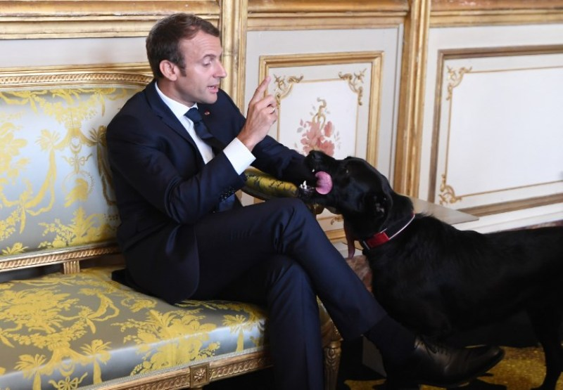 https: img-z.okeinfo.net content 2017 10 23 18 1800408 aduh-anjing-milik-presiden-prancis-pipis-sembarangan-di-istana-kepresidenan-NSWbxGX9wj.jpg