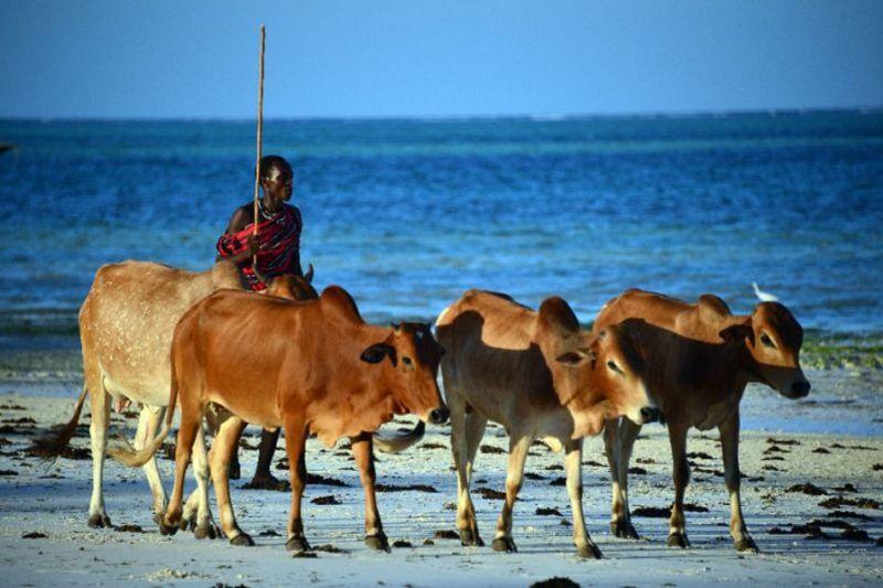 https: img-z.okeinfo.net content 2017 11 09 18 1811558 ya-ampun-hubungan-kenya-tanzania-memanas-karena-binatang-ternak-kenapa-ya-5q5W6ayAwa.jpg