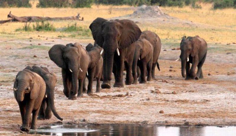 https: img-z.okeinfo.net content 2017 11 13 18 1813348 niat-bersafari-turis-belgia-dan-belanda-tewas-diinjak-gajah-di-zambia-LS4d3PnvF4.jpg