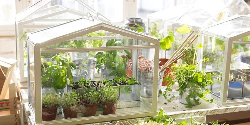 https: img-z.okeinfo.net content 2017 11 24 196 1820147 okezone-week-end-tips-trik-merawat-tanaman-herbal-di-pekarangan-rumah-9UyWrMkP5V.jpg