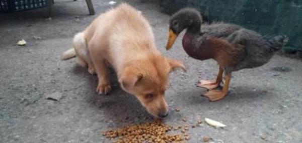 https: img-z.okeinfo.net content 2017 12 08 196 1827200 kisah-persahabatan-anjing-buta-dan-bebek-ini-dijamin-bikin-baper-idW9f4IVX5.jpg