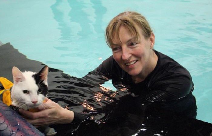 https: img-z.okeinfo.net content 2017 12 22 196 1834354 kaki-cedera-kucing-ini-jalani-terapi-pemulihan-dengan-berenang-PQPWXoubDI.jpg
