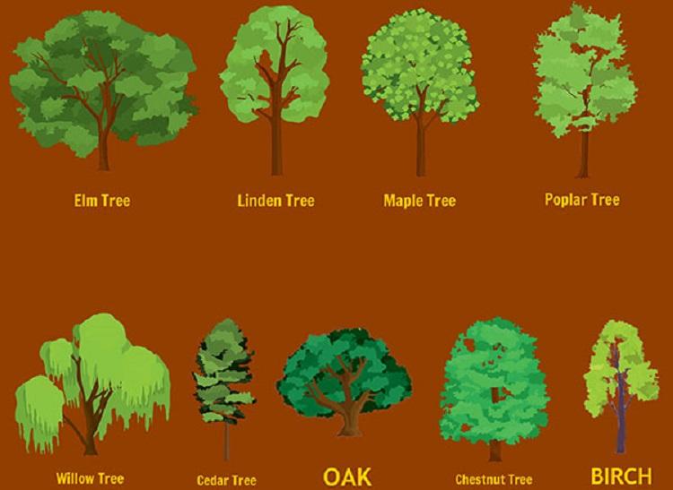 https: img-z.okeinfo.net content 2017 12 27 196 1836553 pilih-pohon-favoritmu-dan-lihat-prediksi-kehidupan-tahun-depan-apakah-beruntung-KzlzA7WQHC.jpg