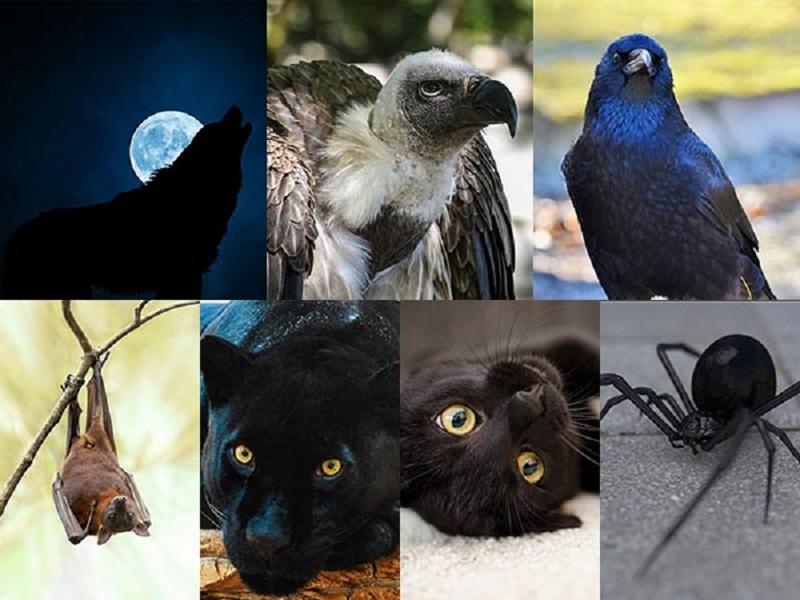 https: img-z.okeinfo.net content 2018 01 03 196 1839419 pilih-salah-satu-6-hewan-ini-bisa-ketahui-sisi-gelap-kepribadian-anda-GXlgT4uhS0.jpg