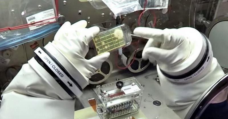 https: img-z.okeinfo.net content 2018 01 03 56 1839418 astronot-identifikasi-mikroba-di-luar-angkasa-untuk-pertama-kalinya-dUooULy513.jpg