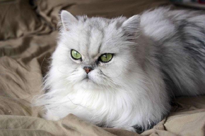 https: img-z.okeinfo.net content 2018 01 09 196 1842419 tips-memelihara-kucing-dan-anjing-buta-di-dalam-rumah-Zgx7etTxGa.jpg