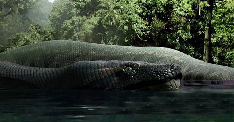 https: img-z.okeinfo.net content 2018 01 10 56 1843156 ular-raksasa-panjang-15-meter-hidup-di-hutan-hujan-tropis-vtLaSstUDa.jpg