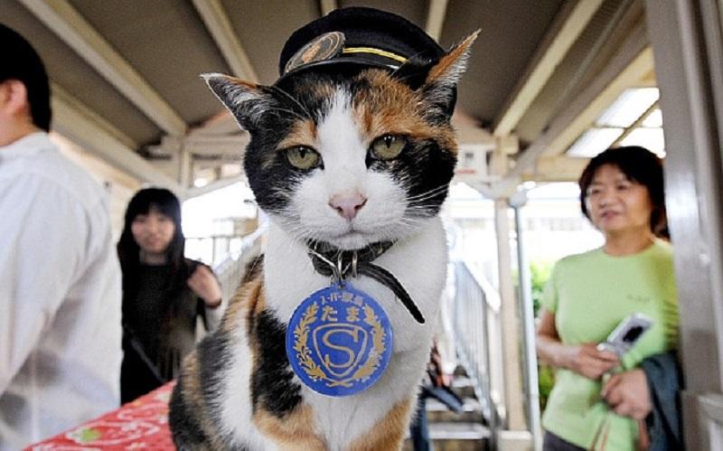 https: img-z.okeinfo.net content 2018 01 11 196 1843784 kisah-haru-kucing-tama-si-penjaga-stasiun-di-jepang-yang-telah-tiada-39NQbyLAPh.jpg