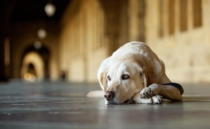 https: img-z.okeinfo.net content 2018 01 12 196 1844026 komunitas-berjiwa-mulia-selamatkan-nyawa-anjing-liar-dalam-bahaya-jSHWJL64dC.jpg