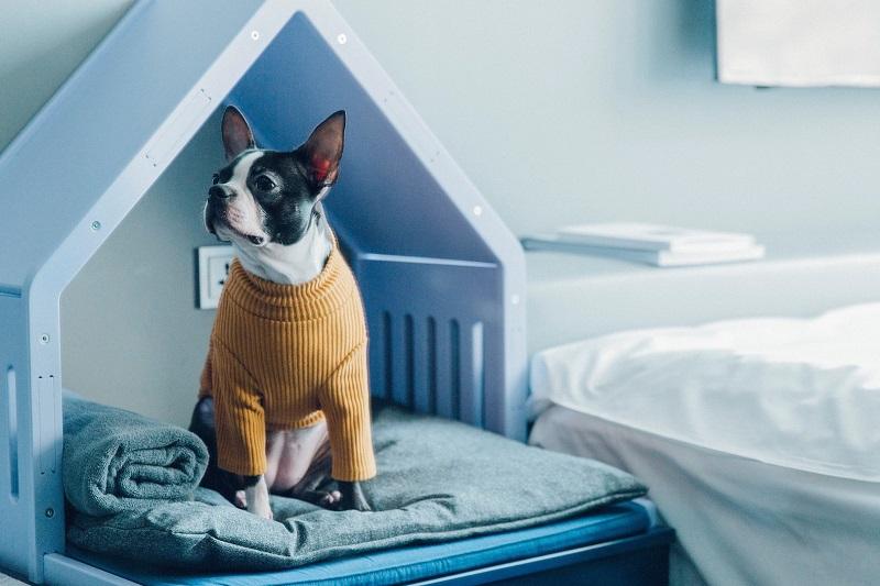 https: img-z.okeinfo.net content 2018 01 12 196 1844124 3-rekomendasi-hotel-khusus-hewan-peliharaan-SZHfQHBXpm.jpg