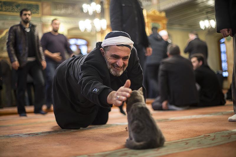 https: img-z.okeinfo.net content 2018 01 12 196 1844230 keistimewaan-kucing-hewan-kesayangan-rasulullah-saw-3XYeAFftH3.jpg