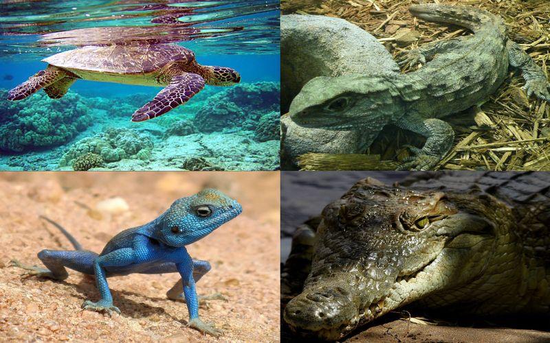 https: img-z.okeinfo.net content 2018 01 12 196 1844265 berkenalan-dengan-depok-reptile-amphibi-community-komunitas-pencinta-reptil-sgeFDZ0yJ2.jpg