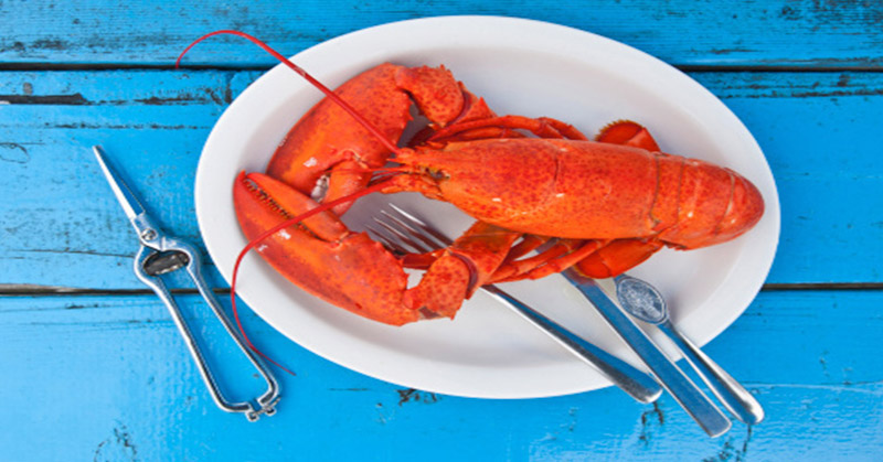 https: img-z.okeinfo.net content 2018 01 12 298 1844009 swiss-keluarkan-larangan-merebus-lobster-hidup-hidup-qjRVaXj49i.jpg