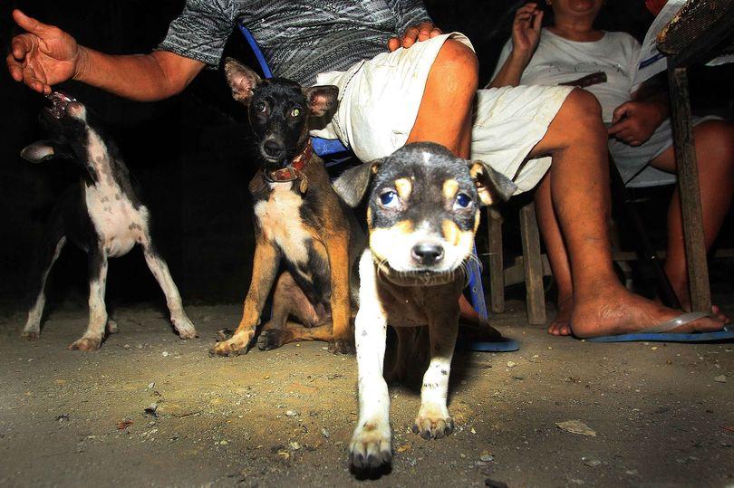 https: img-z.okeinfo.net content 2018 01 12 298 1844078 dibunuh-dengan-disiksa-segera-tandatangani-petisi-stop-konsumsi-daging-anjing-di-seluruh-indonesia-tiECmBRU1p.jpg