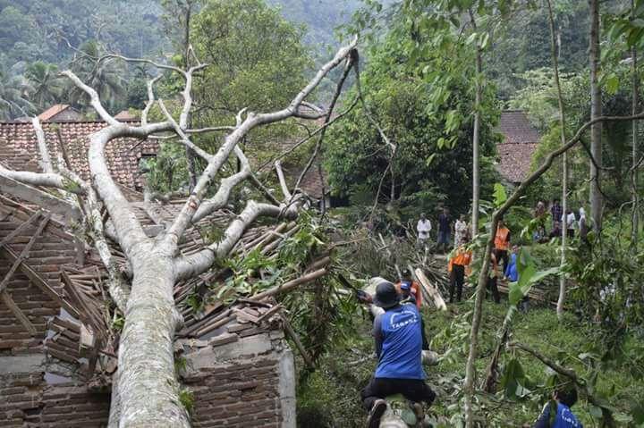 https: img-z.okeinfo.net content 2018 01 13 340 1844590 pohon-tumbang-akibat-angin-kencang-tewaskan-bocah-12-tahun-6BIX7OJfkE.jpg