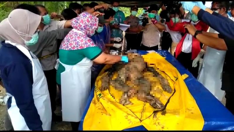 https: img-z.okeinfo.net content 2018 01 19 340 1847255 belasan-peluru-bersarang-di-bangkai-orangutan-yang-mati-tanpa-kepala-6gqQaLrB12.jpg