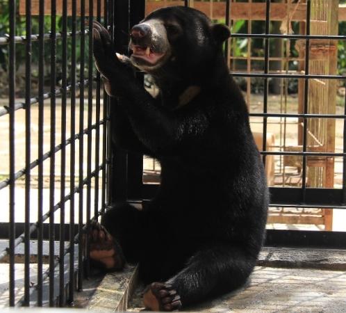 https: img-z.okeinfo.net content 2018 01 26 340 1850930 beruang-tangan-buntung-diserahkan-warga-ke-bbksda-riau-ZbpBkD4OZC.jpg