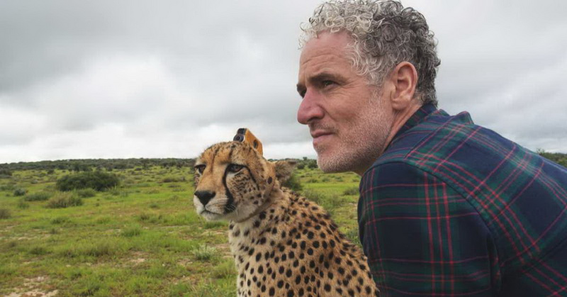 https: img-z.okeinfo.net content 2018 02 02 56 1853955 unik-ini-jadinya-jika-cheetah-jadi-kameramen-n4zvvVNDwD.jpg